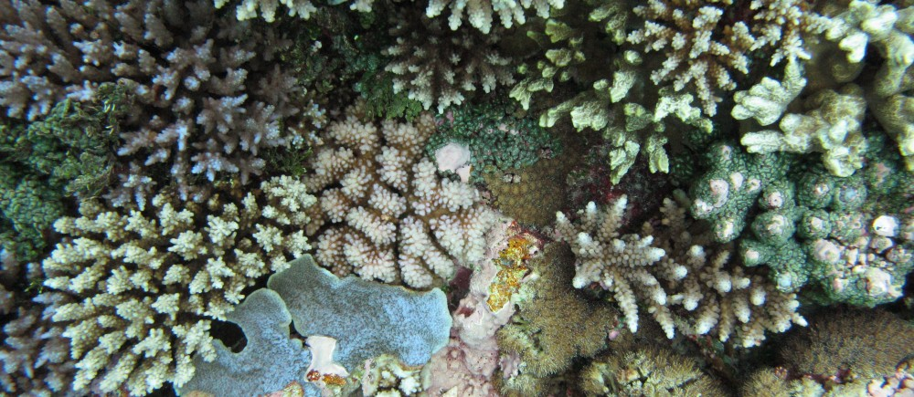 Cartier Island benthic coral community