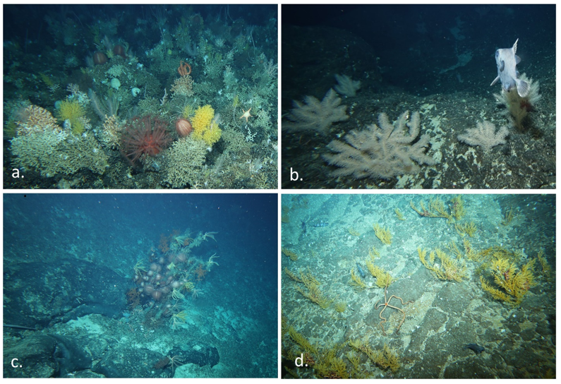 Octocorals, black corals and associated communities CSIRO