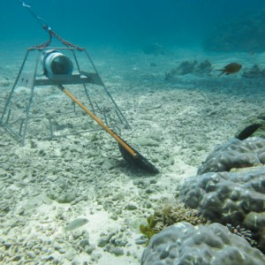 Baited Remote Underwater Video System