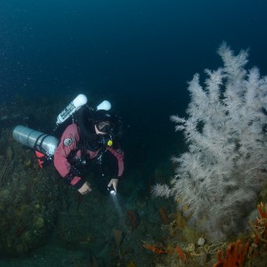 Andreas Klocker and a black coral on Joe's Reef