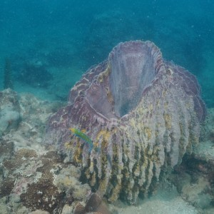 Giant basket sponge