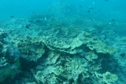 North Ashmore Reef 2017
